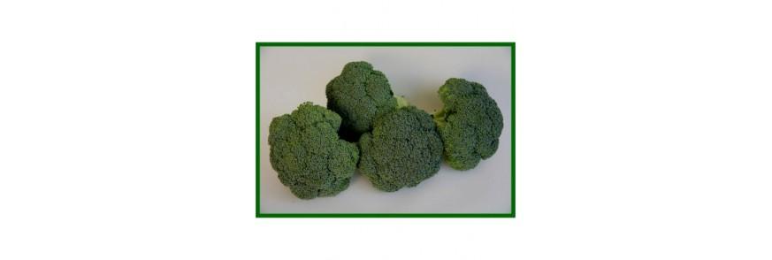 Brokoli Tohumlar