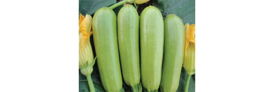 Kabak Tohumlar