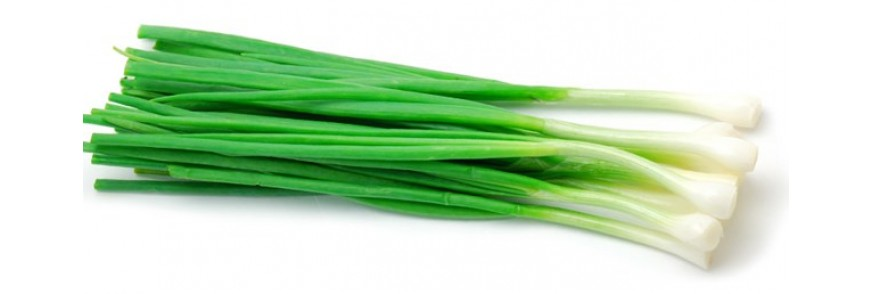 Soğan Tohumları