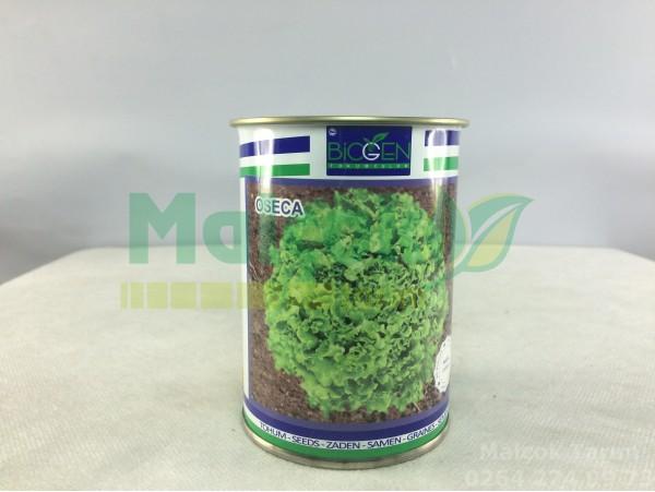 Biogen Oseca Kışlık Kıvırcık Marul Tohumu 100 Gr