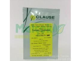 Clause Hmx 5790 F1 Oturak Sofralık Domates Tohumu 1000 Adet