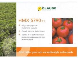 Hmx 5790 Salçalık Sanayi Domates Fidesi